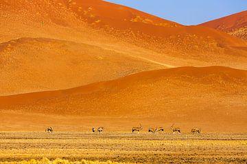 Zandduinen in de Namib woestijn met Oryx antilopen van Chris Stenger