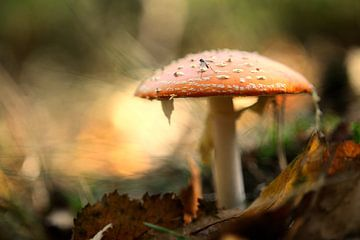 mushroom and fly van rik janse