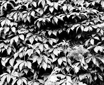 Natur von Sidney de Graaf