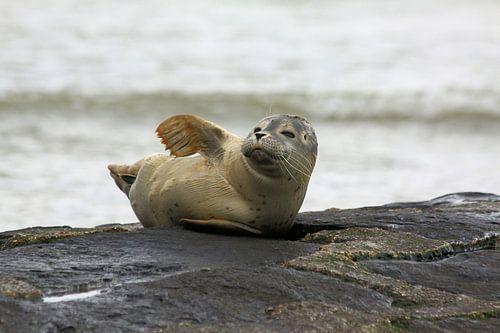 Zeehondje van