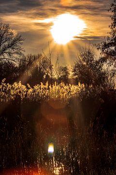 Bright sunlight van Marjolein van Wikselaar