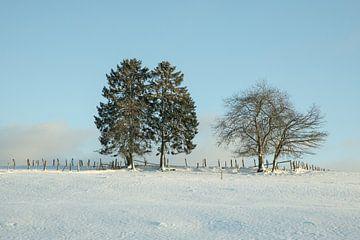Erster Schnee in den belgischen Ardennen von Marinella Geerts
