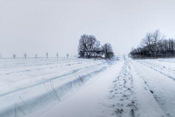 Op weg naar het Uilenest van Marnefoto .nl