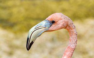 Nahaufnahme des Kopfes eines roten karibischen Flamingos