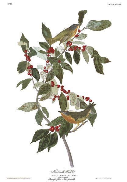 Nashvillezanger van Birds of America