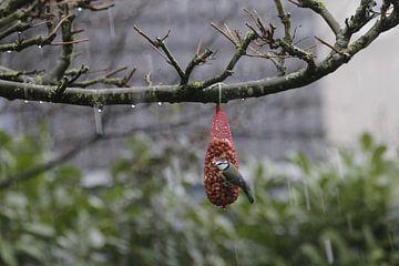 seins de proxénète dans une douche de neige sur Gerard van der Vries