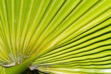 Palmblad detail van Irene Lommers