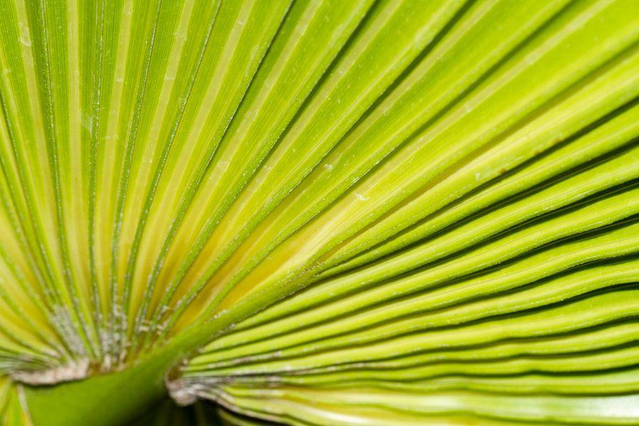 Palmblad detail