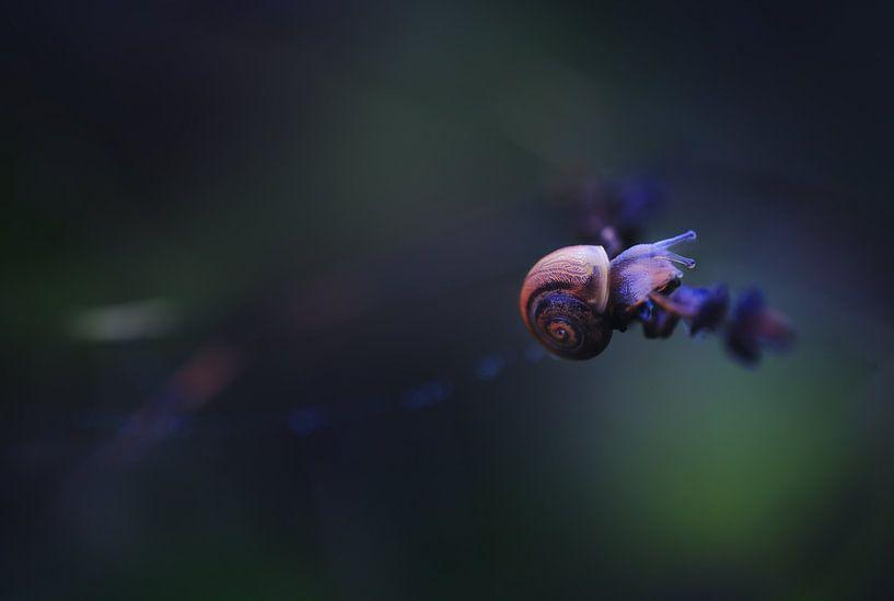 Snail Creature I van Maayke Klaver