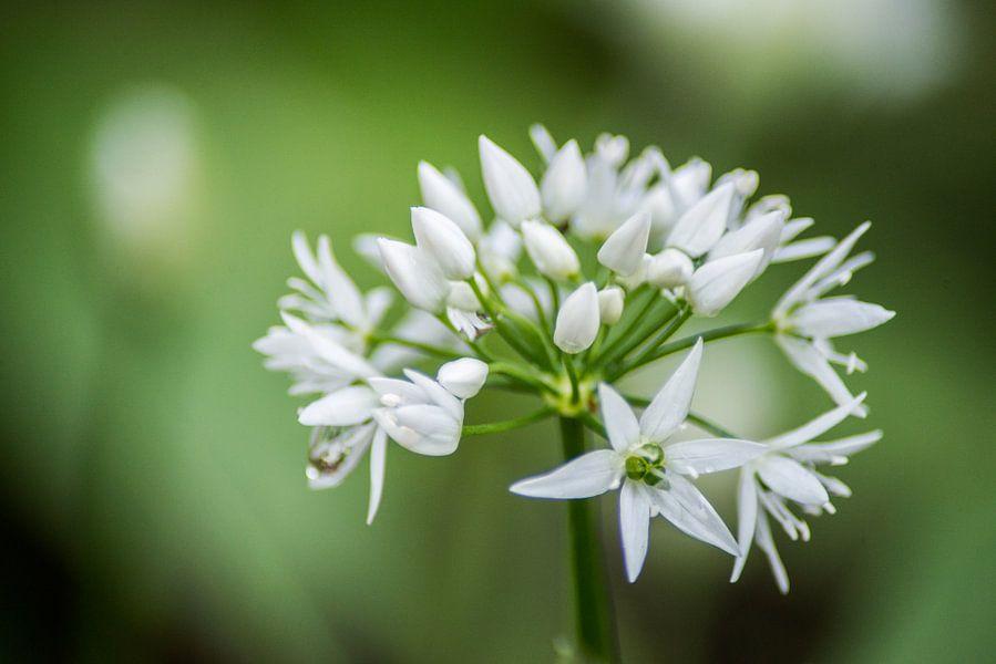 Witte bloemen close-up van Barbara Koppe