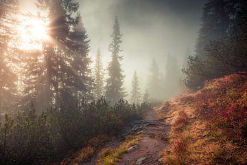 In den Nebel von Coen Weesjes