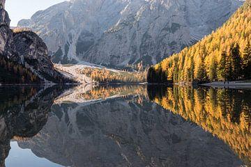 Herbst-Holz Reflexion - Pragser Wildsee, Dolomiten, Italien von Thijs van den Broek