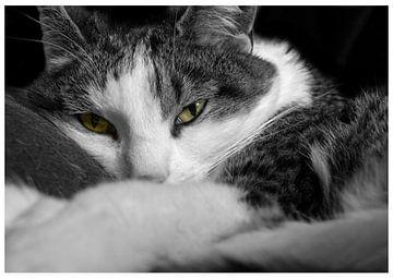 kat net wakker van Patrick Schilperoort