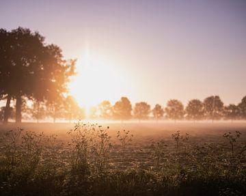 helles Licht von Tania Perneel