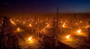 vuurpotten in kersenboomgaard van