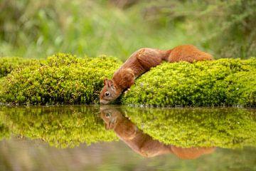 Eekhoorn heeft dorst van Tanja van Beuningen