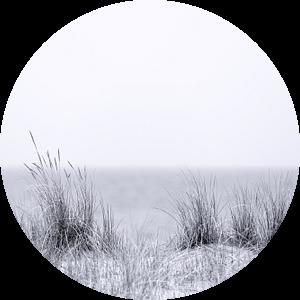 Strandgras in zwart en wit van Tilo Grellmann | Photography