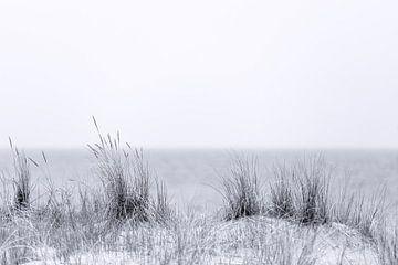 Strandgras in zwart en wit