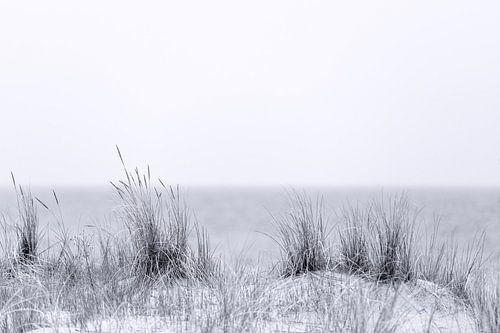 Strandhafer in schwarzweiß