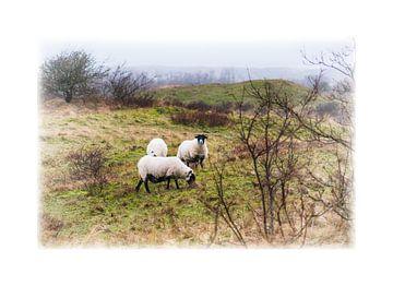 Schafe von Erik Reijnders