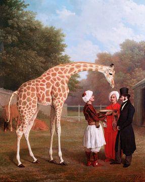 Nubische Giraffe, Jacques-Laurent Agasse
