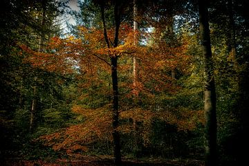 Wald Ermelo