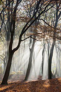 Ochtendnevel in het bos van