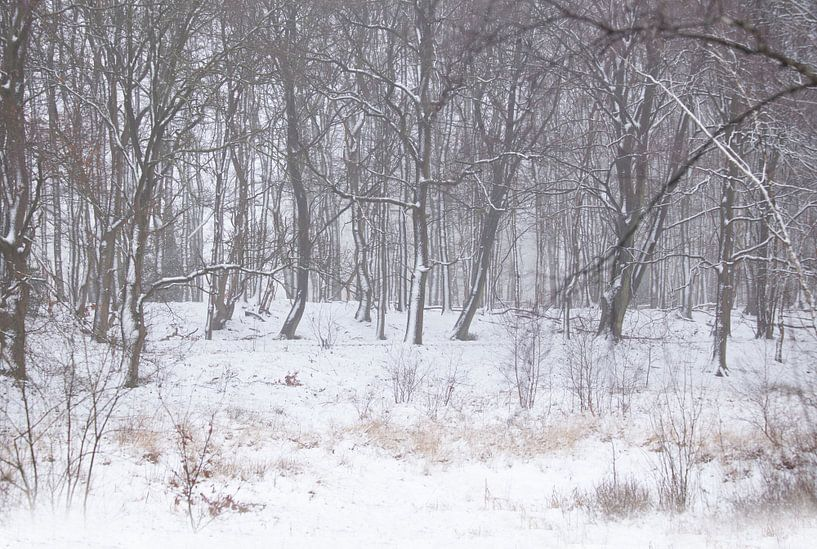 sneeuw van hanny bosveld