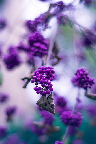 Purple berries von