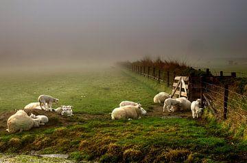 Schafe im Nebel von John Leeninga