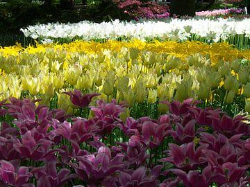 Keukenhof bloemen van Veli Aydin