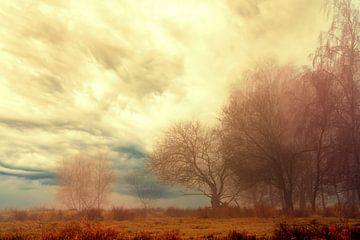 Mysteriöser Morgen am Waldrand von Marcel Kieffer