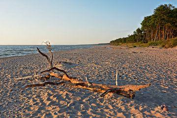 Ein stimmungsvoller Sommerabend am Strand von Gisela Scheffbuch