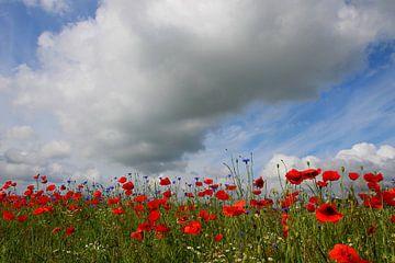Die dicke Wolke sur Ostsee Bilder