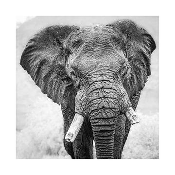 Face to face met een olifant van Sharing Wildlife