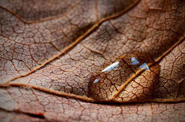 Droplet van Lex Schulte