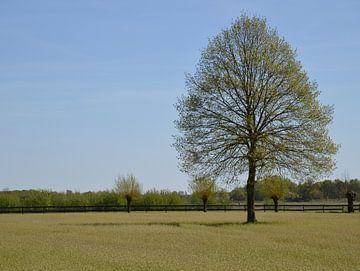 Landschap omgeving Bedaf Uden von richard de bruyn