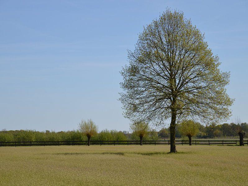 Landschap omgeving Bedaf Uden van richard de bruyn