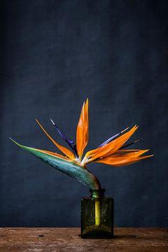 Oranje bloem in vaasje van Jenneke Boeijink