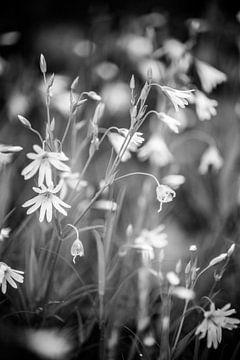 Witte bloemetjes van Barbara Koppe