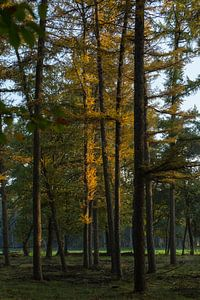 autumn and trees