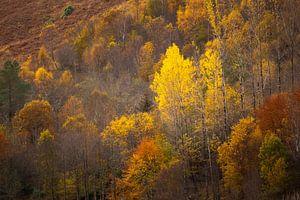 Een herfst van warme tinten van Ton Drijfhamer