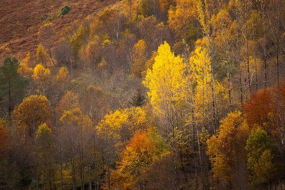 Ein Herbst mit warmen Tönen