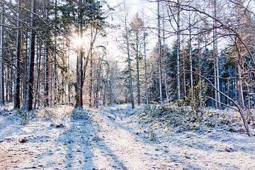Bos in Drenthe op een winterse dag met zon