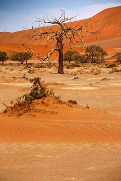 NAMIBIA ... Namib Desert Tree VI van Meleah Fotografie