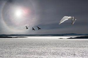 Zee, zon en meeuwen van