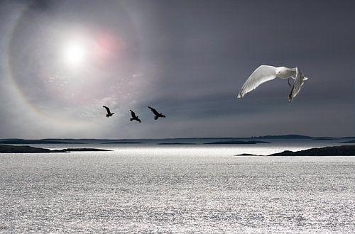 Zee, zon en meeuwen