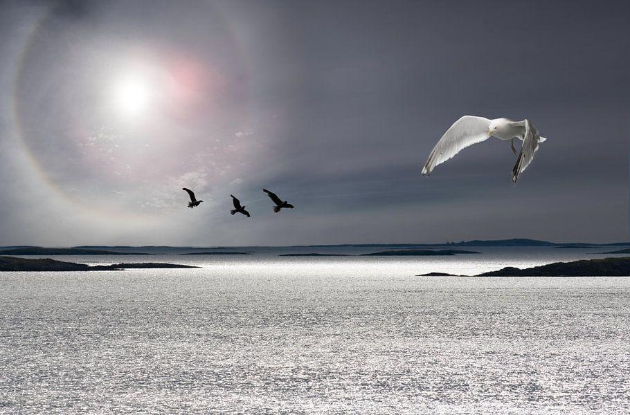 Zee, zon en meeuwen van Gerard Wielenga