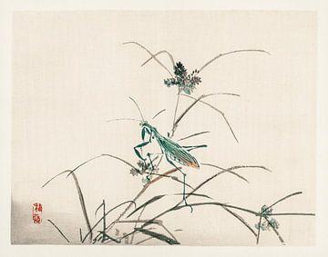 Sprinkhaan Japanse illustratie Kōno Bairei (1844-1895). van Studio POPPY