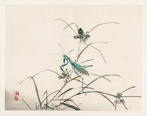 Sprinkhaan Japanse illustratie Kōno Bairei (1844-1895).